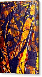 When A Tree Falls Alone In A Forest 1 Acrylic Print by Bruce Combs - REACH BEYOND