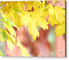 When Autumn Begins Acrylic Print