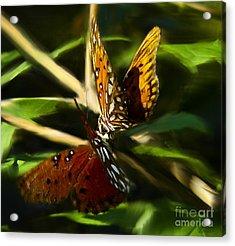 When Butterflies Kiss Acrylic Print