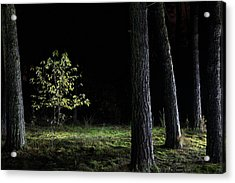 Acrylic Print featuring the photograph When First Leaves Start To Fall - Autumn by Dirk Ercken