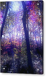 When Forests Dream Acrylic Print by Nina Fosdick