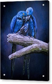 When I'm Feeling Blue Acrylic Print by Brian Tarr