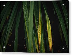 When It Rains Acrylic Print