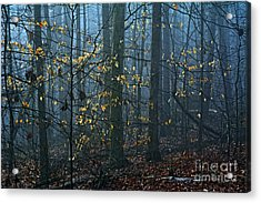 When Light And Shadow Mix Acrylic Print by JW Hanley