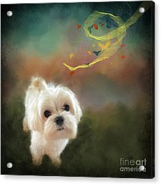 When Puppies Get Confused Acrylic Print