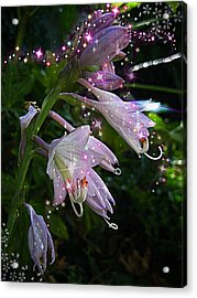 When The Fairies Come Out At Night Acrylic Print by ARTography by Pamela Smale Williams
