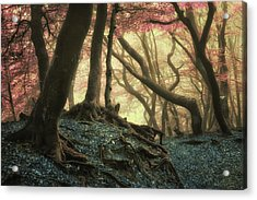 Where Is Alice? Acrylic Print by Martin Podt