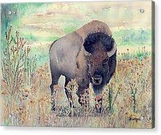 Where The Buffalo Roams Acrylic Print by Arline Wagner