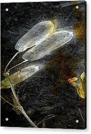Where There Had Been Light II Acrylic Print
