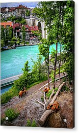 Where's Goldilocks? Bern Switzerland  Acrylic Print