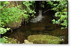 Where's The Fish? Acrylic Print by Rod Jellison