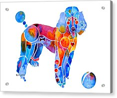 Whimsical French Poodle Acrylic Print by Jo Lynch