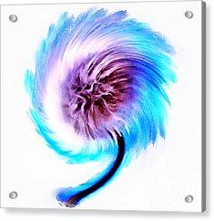 Whirlwind Wishes Acrylic Print