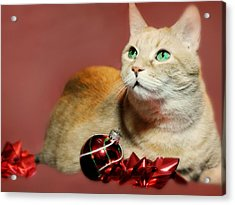 The Christmas Cat Acrylic Print by Diana Angstadt