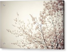 Whisper - Spring Blossoms - Central Park Acrylic Print by Vivienne Gucwa