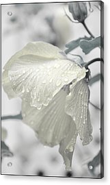 Whisper In Pearlwhite Acrylic Print by Rose  Hill