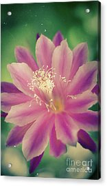 Acrylic Print featuring the photograph Whisper Of Color by Ana V Ramirez