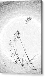 Whisper Acrylic Print by Vicki Pelham