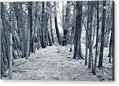 Acrylic Print featuring the photograph Whispering Forest by Wayne Sherriff