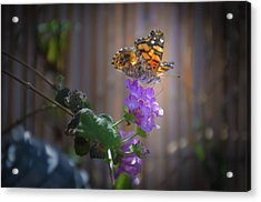 Whispering Wings 2 Acrylic Print