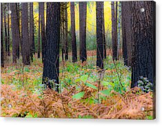 Whispering Woods Acrylic Print by Mary Amerman