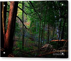 Acrylic Print featuring the photograph Whisperings by Elfriede Fulda