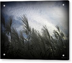 Whispers In The Wind Acrylic Print by Trina Prenzi