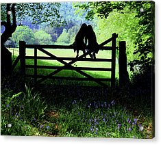 Best Friends On A Farm Gate In Devon Acrylic Print