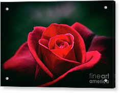 Acrylic Print featuring the photograph Whispers Of Passion by Linda Lees