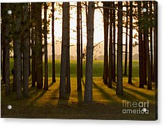 Whispers Of The Trees Acrylic Print by Inspired Arts