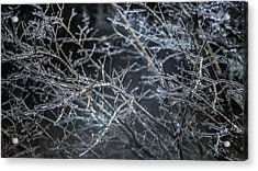 Whispers Of Winter Acrylic Print by Karen Wiles
