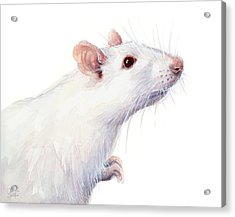 White Albino Rat Watercolor Acrylic Print