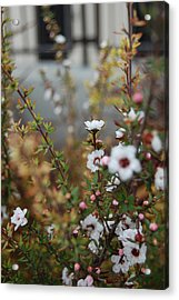 White Amidst It All Acrylic Print by Jean Booth