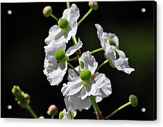 White And Green Wildflowers Acrylic Print