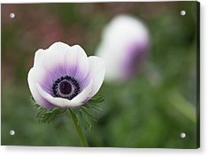 Acrylic Print featuring the photograph White And Purple by Rebecca Cozart
