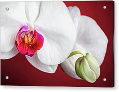 White And Red Orchids Acrylic Print