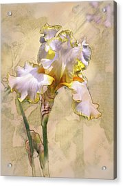 White And Yellow Iris Acrylic Print