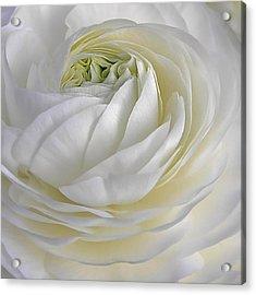 White As Snow Acrylic Print