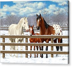 White Bay Appaloosa Horses In Snow Acrylic Print by Crista Forest