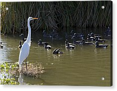 Acrylic Print featuring the photograph White Beauty by Phyllis Denton