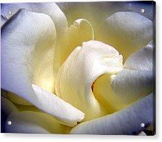 White Beauty Rose Acrylic Print