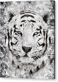 White Bengal Tiger Portrait Acrylic Print