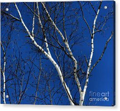 White Birch Blue Sky Acrylic Print by Smilin Eyes  Treasures
