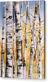 White Birch Meadow Acrylic Print