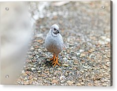 Acrylic Print featuring the photograph White Bird Sneaking Through by Raphael Lopez