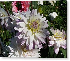 White Bloom Acrylic Print by Colleen Neff