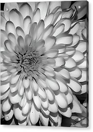 White Bloom Acrylic Print