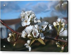 White Blossoms Acrylic Print by Robert Bewick