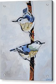 White Breasted Nuthatch Acrylic Print by Anne Lewis