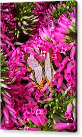 White Butterfly In Pink Heather Acrylic Print